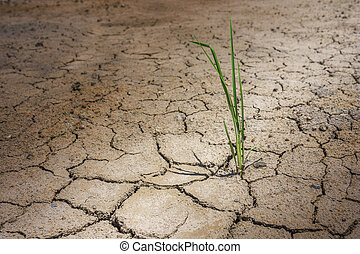 grass on dry crack ground