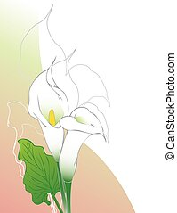 Calla lilies - Card background template with calla flowers