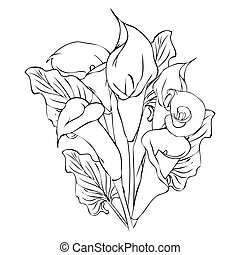 Calla lily flowers - Outline drawing of calla flowers on...