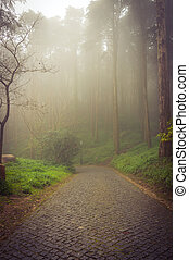 Foggy forest stone path - Foggy forest with stone path