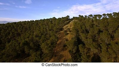 4K Aerial, Flying over a forest in Andalusia, Spain