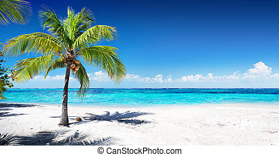 Scenic Coral Beach With Palm Tree