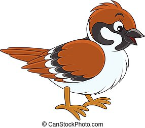 Sparrow - Vector illustration of a sparrow, on a white...
