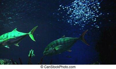 trevally fish