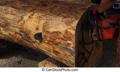 Chainsaw Carving - Chainsaw carver making first cut into a...