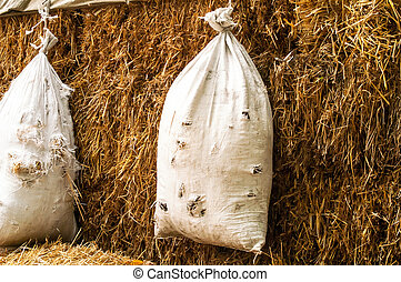 bag, straw , shooting - a hanging bag and straw for the...