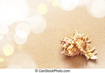Seashell on a sandy beach.