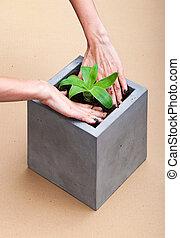 Plant in a  square concrete pot