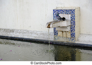 Patio with water pool and dove at Igreja de Sao Vicente de...