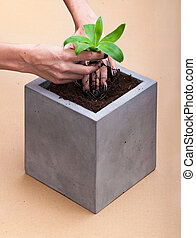 Plant relocation in a square concrete pot