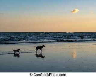 Two dogs on the beach in Samara, Costa Rica
