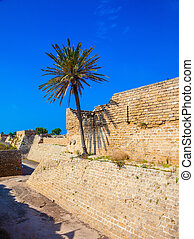 The ancient Caesarea, Israel Lone palm tree growing on the...