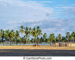 Horses in Samara Beach, Costa Rica, America