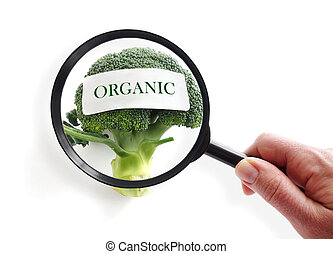 Organic food inspection - Organic broccoli on white with...