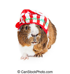 Guinea Pig Christmas Scrooge - Cute and funny guinea pig...
