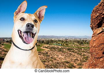 Happy Dog Overlooking Phoenix Arizona - Active dog outdoors...