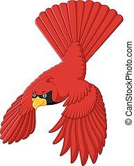 flying cardinal bird - vector illustration of flying...