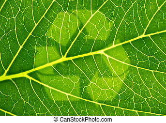 Sustainable - A fine green leaf with a symbol for...