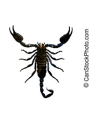 Scorpion Isolated with clipping path on white background