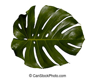 Palm Leaf - Palm-tree leaf texture isolated with clipping...