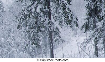 snowfall Winter landscapeWinter beauty scene