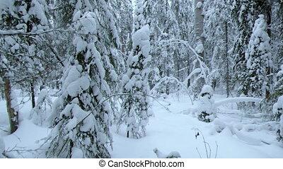 snowfall .Winter landscap - snowfall .Winter...