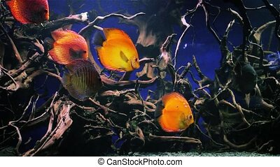 Beautiful underwater world with tropical fish - Wonderful...