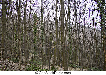 Wald - Deciduous forest in winter waiting for spring