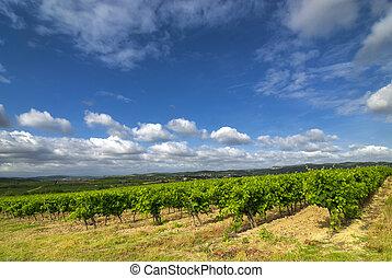 Vineyard near Carcassonne (France) - Vineyards near...