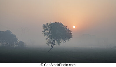 Indian sunrise - magical sunrise with tree