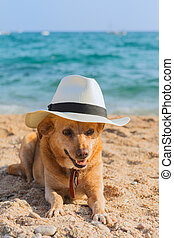 Funny dog at the beach - Funny dog with hat at the beach
