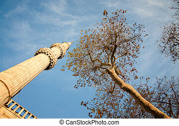 Minaret and the branch of a tree against the sky