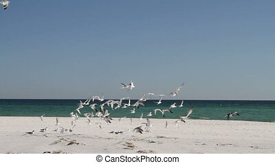 Jogging Through Seagulls