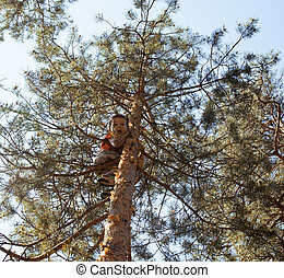 little cute boy climbing on tree hight, along among pines in...