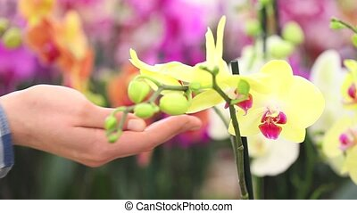 flower garden, woman hand touching an orchid
