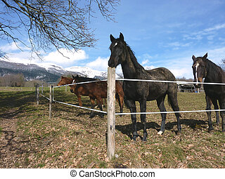 Horses behind a fence