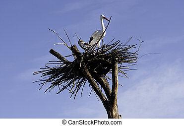 bilder von storch holz baum a holz stork collects zweige und csp6582008 suche. Black Bedroom Furniture Sets. Home Design Ideas