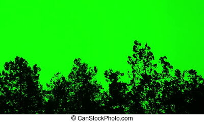 plant darck silhouette - 3178 plant silhouette on green...