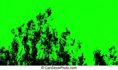 Silhouette of bushes green screen , chromakey