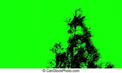 tree against a green screen - Tree against a green screen,...