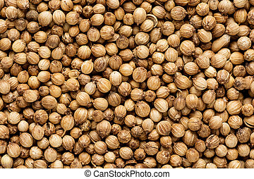 Organic Dried coriander seeds Coriandrum sativum closeup...