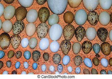 Collection of various birds' eggs of different bird species.