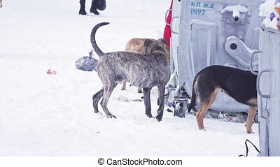 Dogs on snow in garbage - Walkers and dogs looking for food...