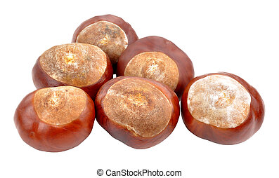 Horse Chestnut Tree Conkers - Horse chestnut tree conkers...