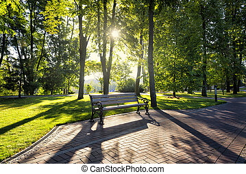 Early morning in the park
