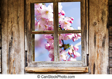 Old wooden window frame, spring, flowering trees - Wooden...
