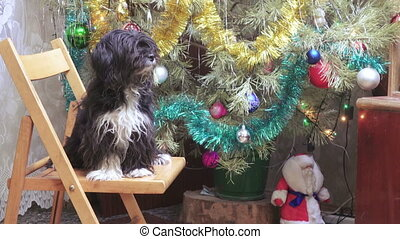 Home dog at Christmas tree - Next to Christmas tree sitting...