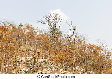 Forest after fire on a mountain - Trees on a mountain after...