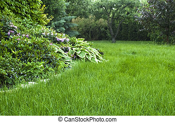 peaceful garden. freshly lawn grass. summertime