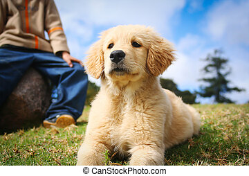 Beautiful golden retriever puppy lying in the grass